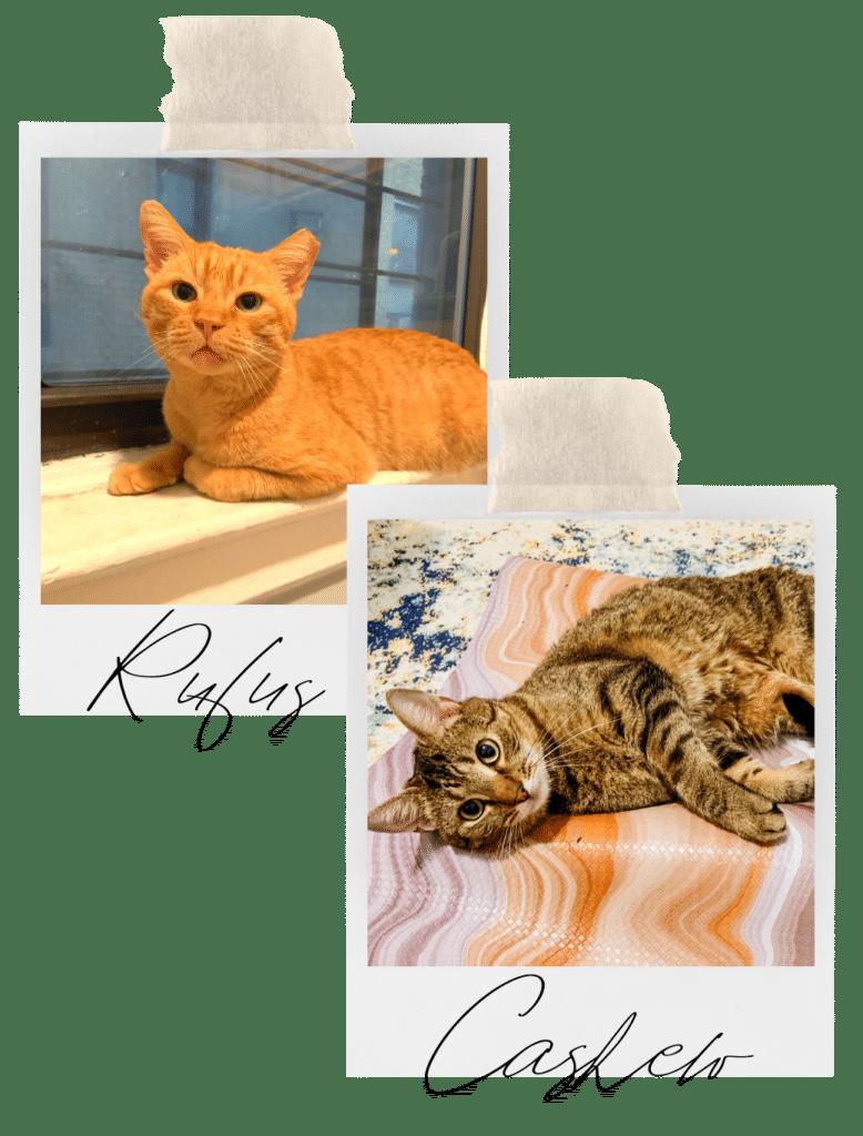 Rachel's Cats - Rufus & Cashew